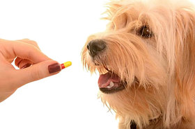 Антипаразитарные средства для собак от блох, клещей и глистов