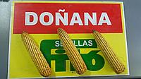 Позднеспелый Гибрид Кукурузы Fito Donana/ФАО 600
