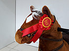 Лошадка-качалка для детей с мелодиями. Рассрочка. Kaspi RED., фото 5