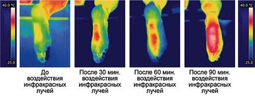 Уже через полчаса после включения стелек ступни ног заметно теплеют (нажмите на изображение, чтобы увеличить)