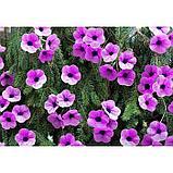 """Бумага гофрированная, 990 """"Орхидея"""", 50 см х 2,5 м, фото 3"""