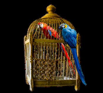 Клетки и транспортировочные боксы для птиц