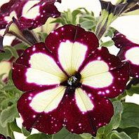 Lighting Sky №533 / подрощенное растение