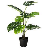 Растение искусственное ФЕЙКА  д/дома/улицы монстера, 19 см ИКЕА, IKEA, фото 1