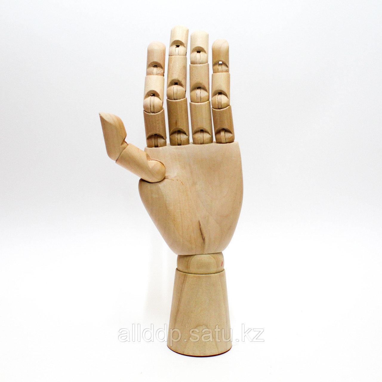 """Модель """"Рука"""" 25 см, левая"""