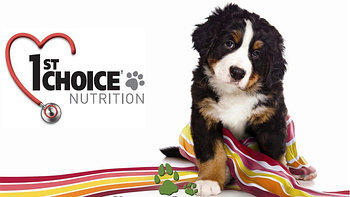 1st Choice (Фест Чойс) сухие корма для собак