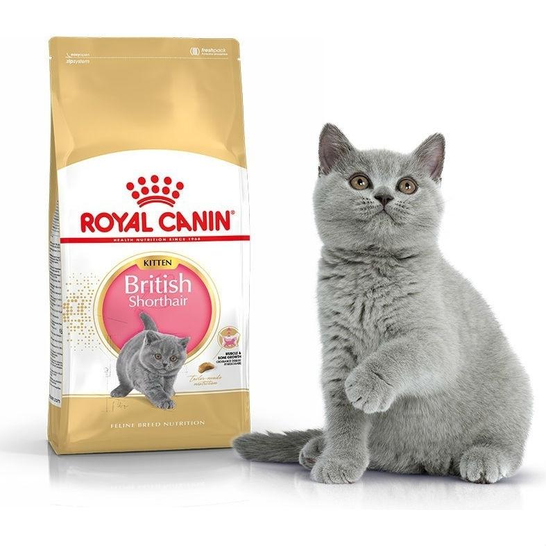 Сухой корм Роял Канин для котят британской короткошерстной