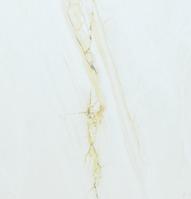КЕРАМОГРАНИТ 80смХ80см Серо-белый под мрамор