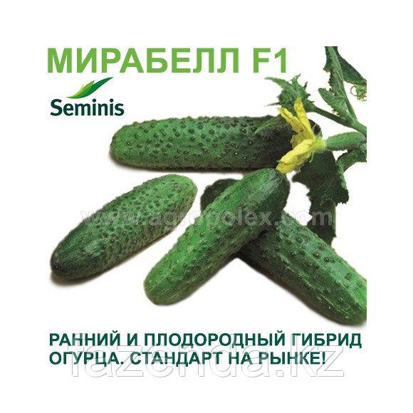Огурец Мирабелла  F1  1000 шт Seminis