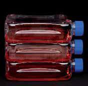 Колбы выращивания клеток Thermo Scientific NuncTM 300cm?, обработанные, PS/PE-HD, стерильные