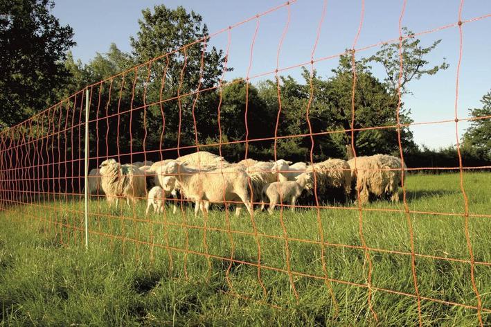 Электроизгородь для овец, фото 2