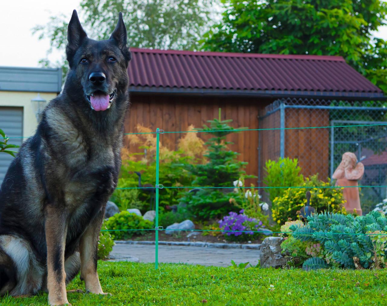 Электроизгородь для собак