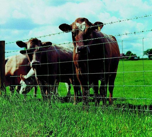 Электропастухи для скотоводства, фото 2