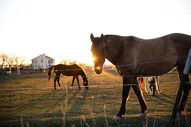 Электрическая изгородь для лошадей
