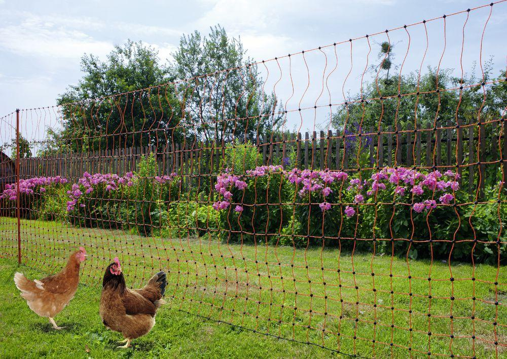 Электронный пастух для птицы