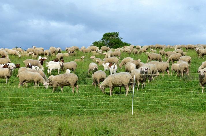 Электропастух для коз, фото 2