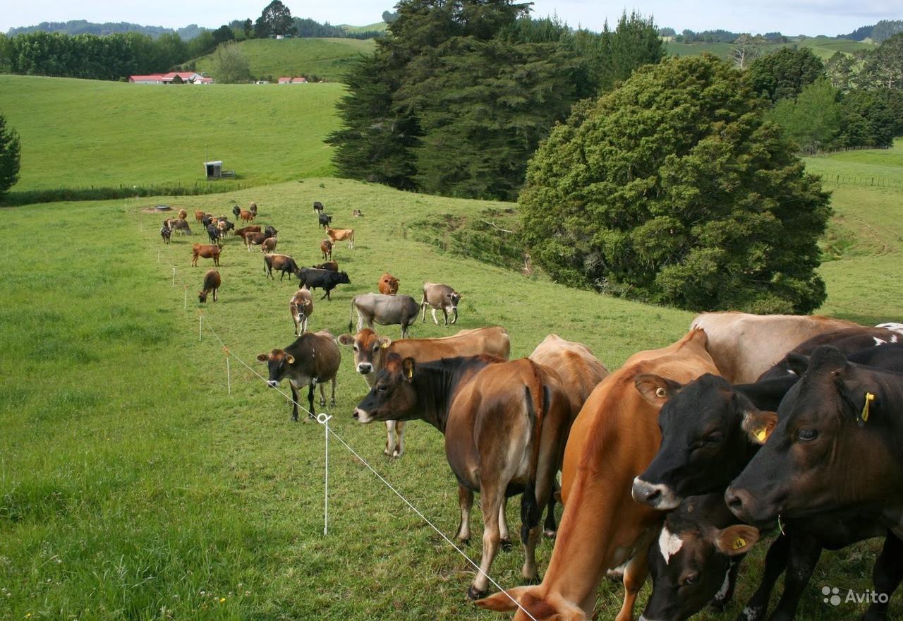 Электроизгородь для крупно рогатых скотин
