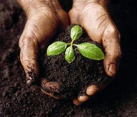 Подбор почвы для комнатных растений - почва, торф, подбор почвы