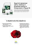 """Средство для срезанных цветов и саженцев """"Пуршат В"""", 0,5 л, фото 5"""