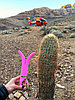"""Многофункциональный вибромассажер """"Gvibe 3"""", L 24.0 см, розовый (ПОД ЗАКАЗ), фото 6"""