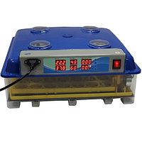 Инкубатор автоматический WQ-55