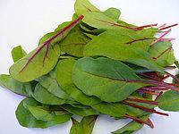 Бейби листья Мангольда зеленые