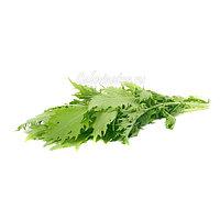 Бейби листья зеленые Мицуна