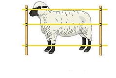 Электропастух для овец (комплект на 500 м.)