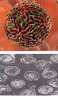 Уничтожение вирусов бактерий возбудителей инфекционных заболеваний, фото 5
