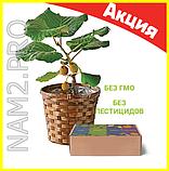 Комнатные плодовые мини-деревья (лимон, апельсин, киви, вишня, гранат, мандарин, груша), фото 3