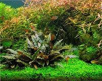 Растения аквариумные морские и пресноводные