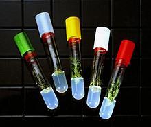 Пробирки из боросиликатного стекла, нестерильные Sigma-Aldrich