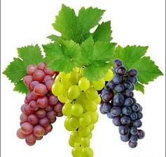Саженцы винограда столовые сорта