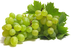 Саженцы технического (винного) винограда
