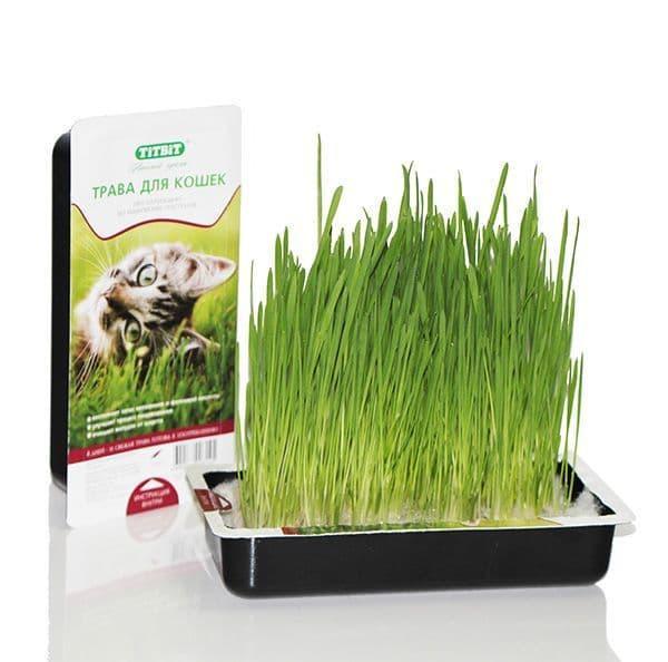 Трава для кошек (Овес), TitBit - 40 г