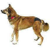 Черные защитные эластичные трусики для собак - 32-39 см