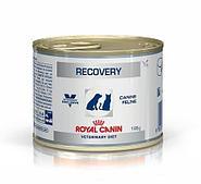 Консерва Royal Canin Recovery для собак и кошек в восстановительный период после болезни - 195 г