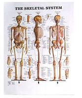 Плакат 3Д пластиковый медицинский ОПТОМ