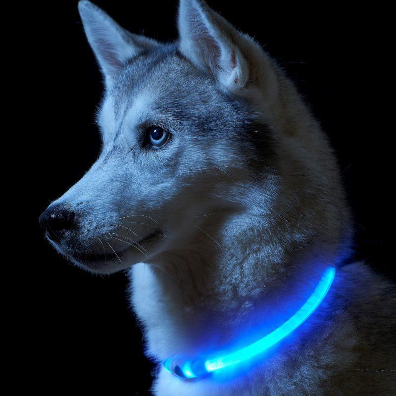 Светодиодный ошейник для собак usb, цвет голубой, размер S