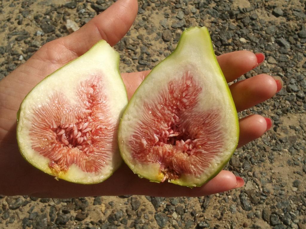 Инжир сорт melanzana