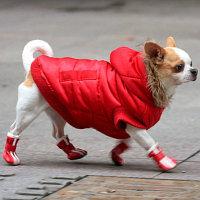 Одежда для домашних животных, общее