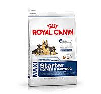 Royal Canin MAXI STARTER M&B 4 kg. Корм для кормящих собак крупных пород