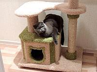 Домики для кошек и когтеточки