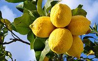 Лимон ШТУЧНО