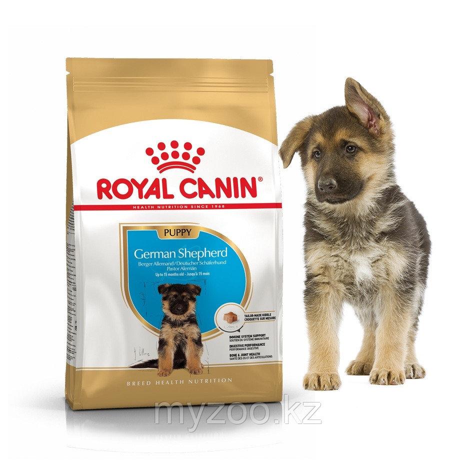 Корм для щенков породы немецкая овчарка Royal Canin GERMAN SHEPHERD PUPPY 12 kg