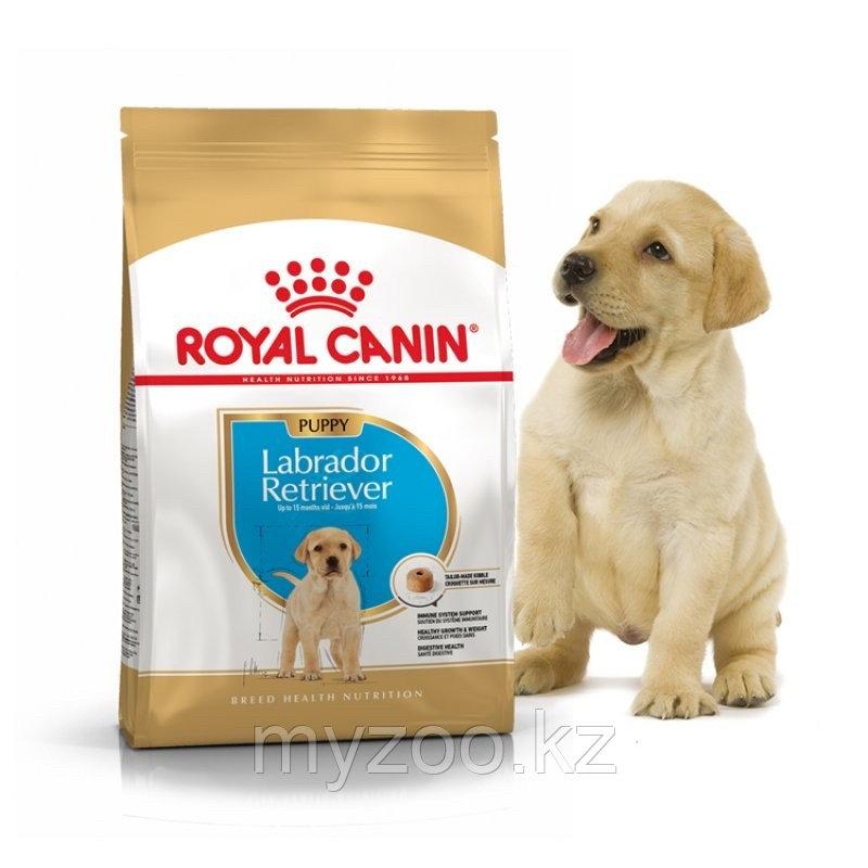 Корм для щенков породы лабрадор Royal Canin LABRADOR PUPPY 12 кг