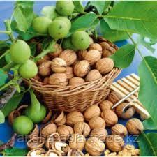 Саженец Грецкого ореха Идеал