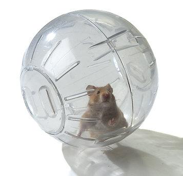 Прогулочный шар для хомячка и других грызунов