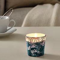 АВЛОНГ Неароматическая свеча в стеклянном подсвечнике, пальмовый лист зеленый, 7.5 см
