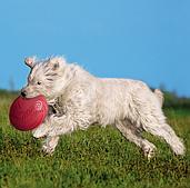 """Игрушка """"Диск - апорт"""" для купания и игры собак, Trixie - 24 см"""